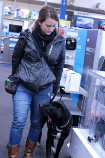 Thinking of getting a Diabetes Alert Dog? What to look for ?